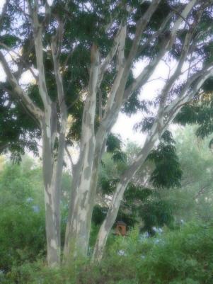 a speckaldy leopard tree