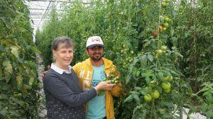UB's Amazing tomatoes