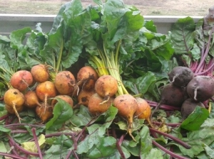 Lockyer Beetroots